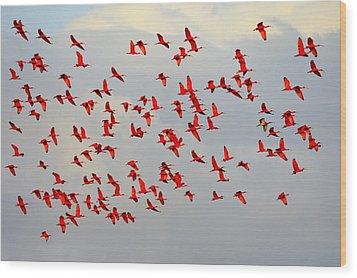 Scarlet Sky Wood Print by Tony Beck