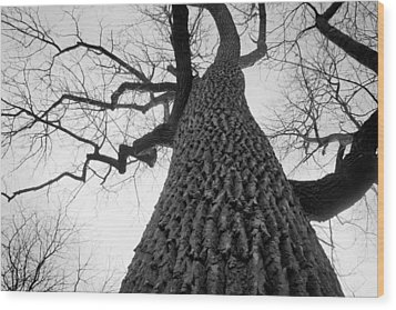 Scary Tree Wood Print by Richie Stewart
