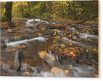 Scattered Leaves Wood Print by Mike  Dawson