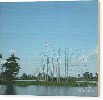 Wood Print featuring the photograph Scenic Swamp Cypress Trees by Joseph Baril