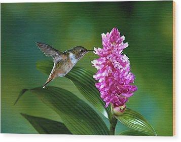 Scintillant Hummingbird Selasphorus Wood Print by Michael and Patricia Fogden