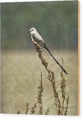 Scissortailed-flycatcher Wood Print by Betty LaRue