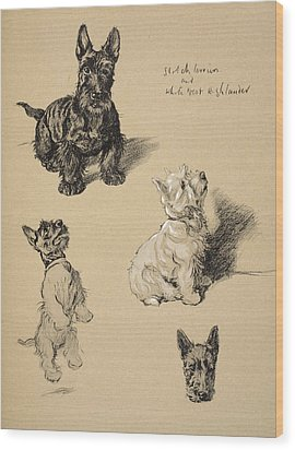 Scotch Terrier And White Westie Wood Print by Cecil Charles Windsor Aldin