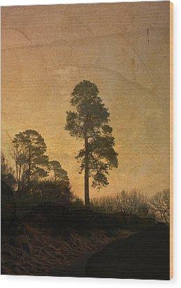 Scots Pine Wood Print by Liz  Alderdice