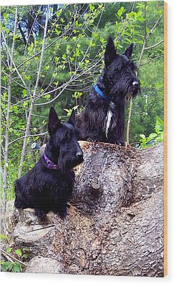 Scotties Wood Print