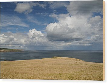 Scottish Coastal Wheatfield Wood Print