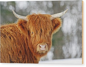 Scottish Highland Cow Wood Print by Michael Allen