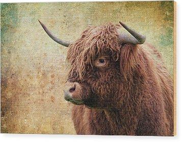 Scottish Highland Steer Wood Print by Steve McKinzie
