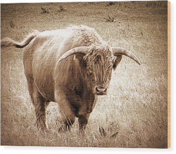Scottish Highlander Bull Wood Print by Karen Shackles
