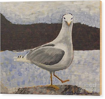 Scottish Seagull Wood Print