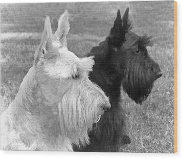 Scottish Terrier Dogs Black And White Wood Print by Jennie Marie Schell