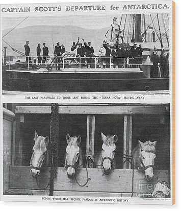 Scotts Departure For Antarctica Ponies Wood Print by Mary Evans