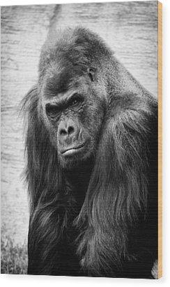 Scowling Gorilla Wood Print by Goyo Ambrosio