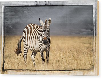 Scratched Tin Zebra Wood Print by Mike Gaudaur