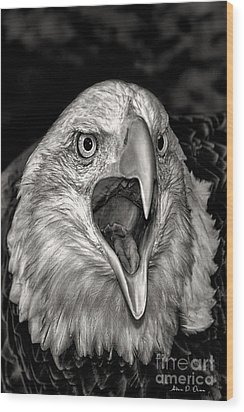 Screamin Eagle Wood Print by Adam Olsen