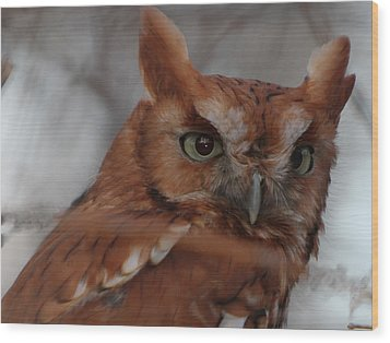 Wood Print featuring the photograph Screech Owl by Constantine Gregory
