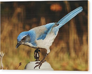 Wood Print featuring the photograph Scrub Jay by VLee Watson