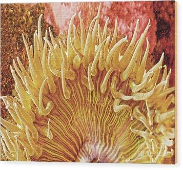 Sea Anenome Stretch Wood Print
