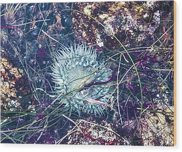 Sea Anenome - Terrestrial Flower Wood Print by Terry Rowe