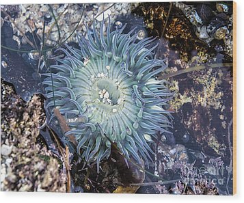 Sea Anenome Wood Print by Terry Rowe