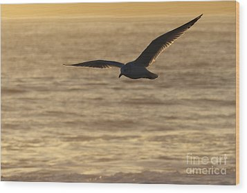 Sea Bird In Flight Wood Print by Paul Topp