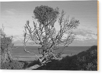 Sea Cliff Tree Wood Print by Amanda Holmes Tzafrir