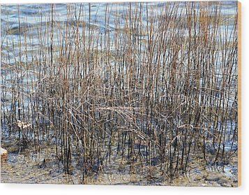 Wood Print featuring the photograph Sea Grass by Judy Palkimas