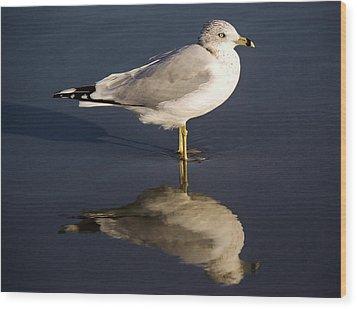 Sea Gull Reflection Wood Print by Paulette Thomas