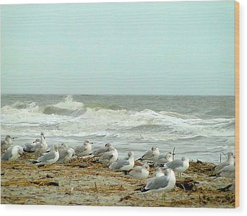 Sea Gulls In Windy Surf Wood Print by Cindy Croal
