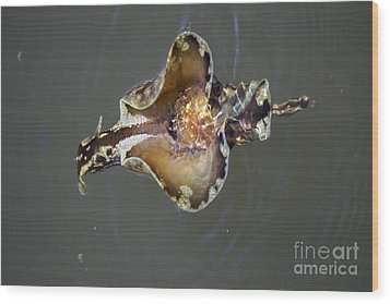 Sea Hare Asea Wood Print by Theresa Willingham
