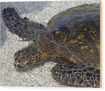 Sea Life Wood Print by Athala Carole Bruckner