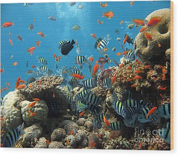 Sea Life Wood Print by Boon Mee