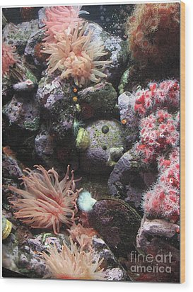 Wood Print featuring the photograph Sea Life by Chris Anderson