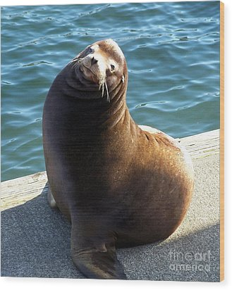 Wood Print featuring the photograph Sea Lion Basking In The Sun by Chalet Roome-Rigdon