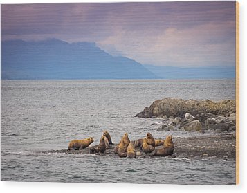 Wood Print featuring the photograph Sea Lion Bulls by Janis Knight