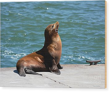 Sea Lion Posing On Boat Dock Wood Print