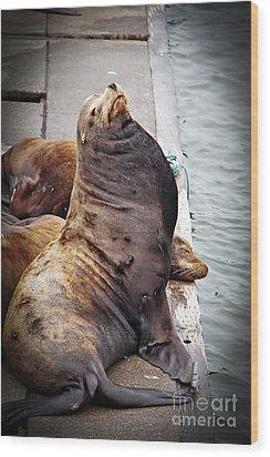 Sea Lion Wood Print by Robert Bales