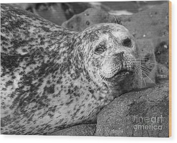 Sea Lion Stare In Monochrome Wood Print by Darleen Stry