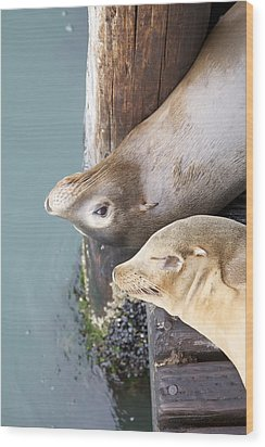 Sea Lions Wood Print by Ashley Balkan