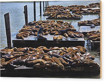 Sea Lions At Pier 39  Wood Print by Garry Gay