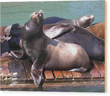 Sea Lions Sunning Wood Print by Yvette Pichette