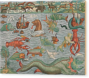 Sea Monsters 1544 Wood Print by Photo Researchers