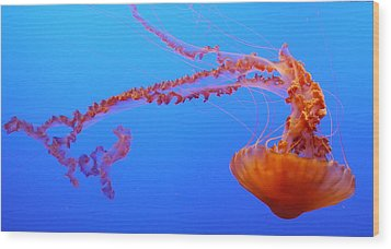 Sea Nettle Jellyfish Wood Print