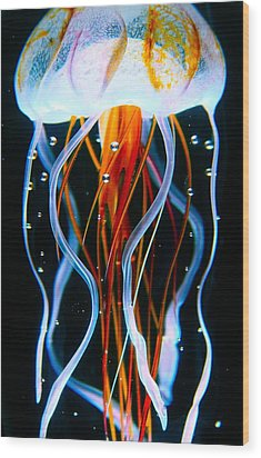 Sea Nettle Jellyfish Wood Print by Karon Melillo DeVega