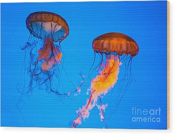 Sea Nettles Wood Print by Anthony Sacco