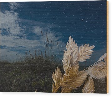 Sea Oat Beach Wood Print by Randy Sylvia
