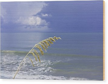 Sea Oats Ahead Of The Storm Wood Print by Karen Stephenson