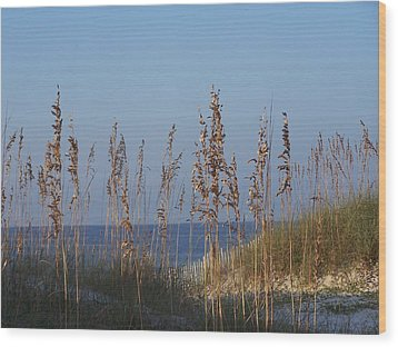 Wood Print featuring the photograph Sea Oats by Michele Kaiser