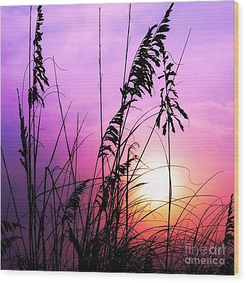 Sea Oats Wood Print by Scott Cameron