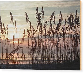 Fabulous Blue Sea Oats Sunrise Wood Print by Belinda Lee
